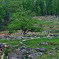 Witness Tree Devils Den by William Fox