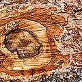 Wood Detail by Matthias Hauser