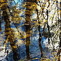 Woodland Reflections by Shawna Rowe