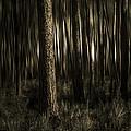 Woods by Mario Celzner