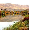 Yakima River Autumn Print by Carol Groenen