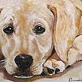 Yellow Labrador