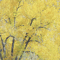 Yellow Trees by Ann Powell