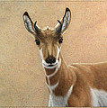 Young Pronghorn by James W Johnson