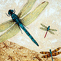 Zen Flight - Dragonfly Art By Sharon Cummings by Sharon Cummings