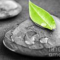 Zen Stones by Elena Elisseeva