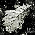 Leaf by Odon Czintos