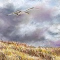 Seagull Flying Over Dunes by Jack Skinner