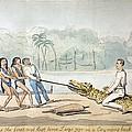 1826 Naturalist Charles Waterton & Caiman by Paul D Stewart