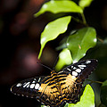 A Butterfly Perches On A Leaf by Taylor S. Kennedy