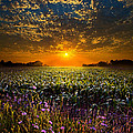A New Day Print by Phil Koch