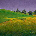 A Sliver Of Canola by David Patterson