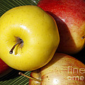 An Apple A Day by Denise Pohl