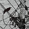 Bird On A Wire by William Cauthern