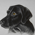 Black Labrador by Patricia Ivy