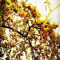 Branch Of Heaven by La Rae  Roberts