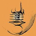 Cleft Lip by Mehau Kulyk