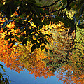 Colorful Reflections by LeeAnn McLaneGoetz McLaneGoetzStudioLLCcom
