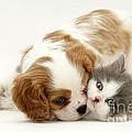 Dog And Cat Print by Jane Burton