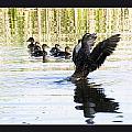 Duck Family by Odon Czintos