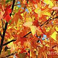 Fall Colors by Carlos Caetano