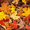 Fall Leaves Background by Elena Elisseeva