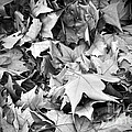 Fallen Leaves by Fabrizio Troiani