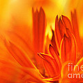 Fire Storm  by Elaine Manley