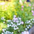 Flower Garden In Sunshine by Elena Elisseeva