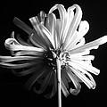 Flower by Sumit Mehndiratta
