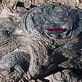 Fossilised Stromatolites by Dirk Wiersma
