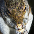 Grey Squirrel by Georgette Douwma
