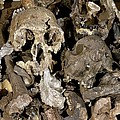 Hominid Skull Casts by Volker Steger