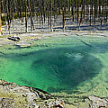Hot Springs Yellowstone National Park by Garry Gay