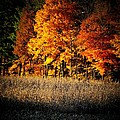 Indiana Autumn by Michael L Kimble