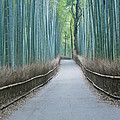 Japan Kyoto Arashiyama Sagano Bamboo by Rob Tilley