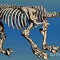Megatherium Extinct Ground Sloth by Science Source