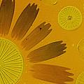 Microscopic Arrangement by Darlyne A. Murawski