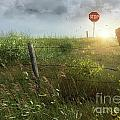 Old Country Fence On The Prairies by Sandra Cunningham
