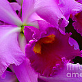 Orchid 5 by Julie Palencia