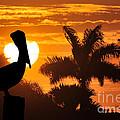 Pelican At Sunset by Dan Friend