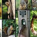 Please Don't Feed The Squirrels by Elizabeth Hart