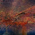Raging Rapids by Jerry Cordeiro