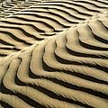 Rippled Sand Dunes by Tek Image