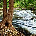 River Through Woods by Elena Elisseeva
