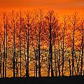 Silhouette Of Trees Against Sunset by Don Hammond