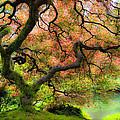 Tree of Beauty Print by Steve McKinzie