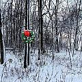 Tyra's Woods At Christmas by Julie Dant