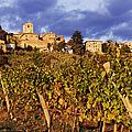 Vineyards Print by Jeremy Woodhouse