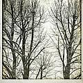 Winter Trees by Silvia Ganora